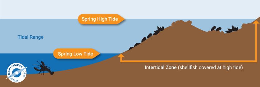 intertidal-zone_1